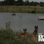 DogMan2011-13